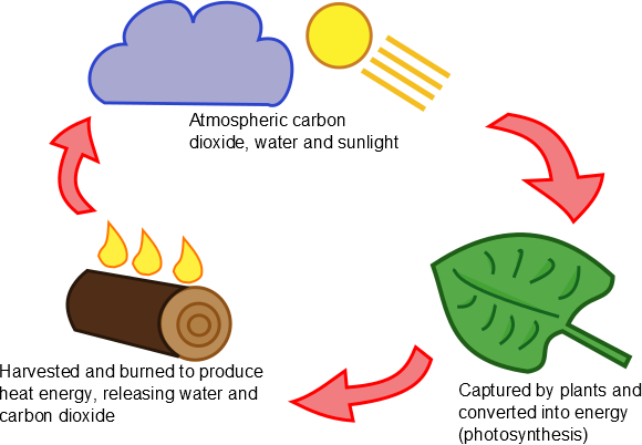 The Biomass Cycle
